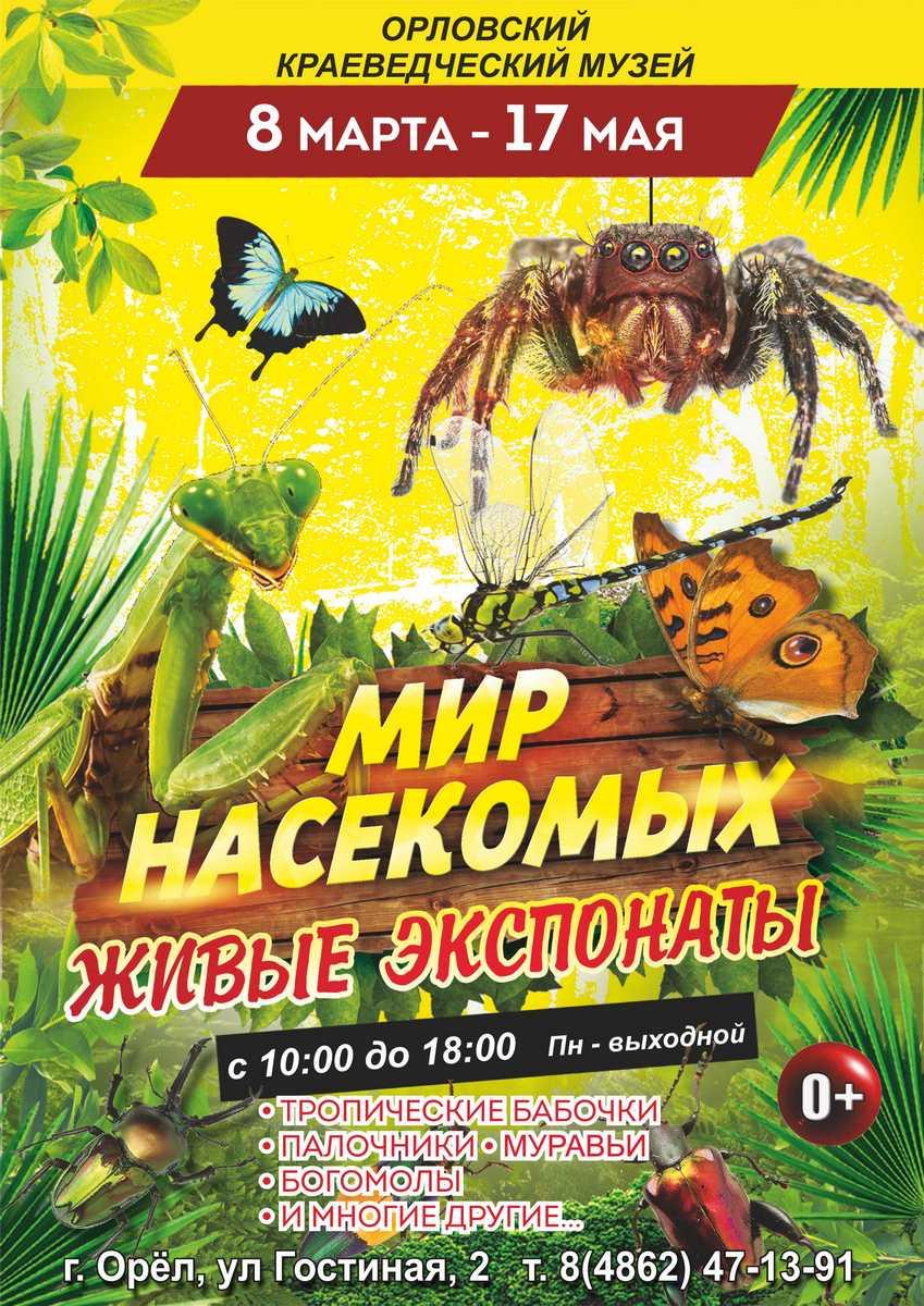 Мир насекомых. Живые экспонаты